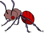 A very ugly ant